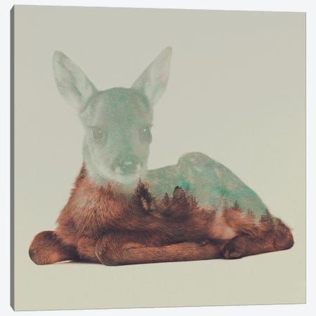 Resting Fawn Canvas Print #ALE76} by Andreas Lie Canvas Artwork