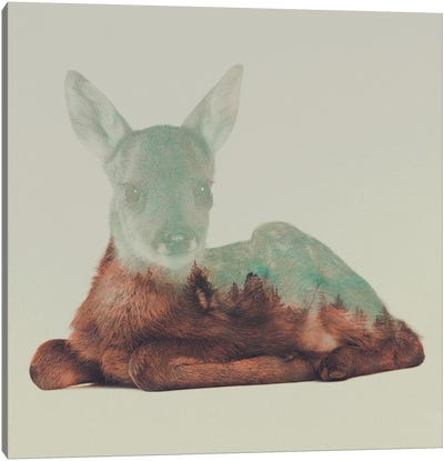 Resting Fawn Canvas Art Print