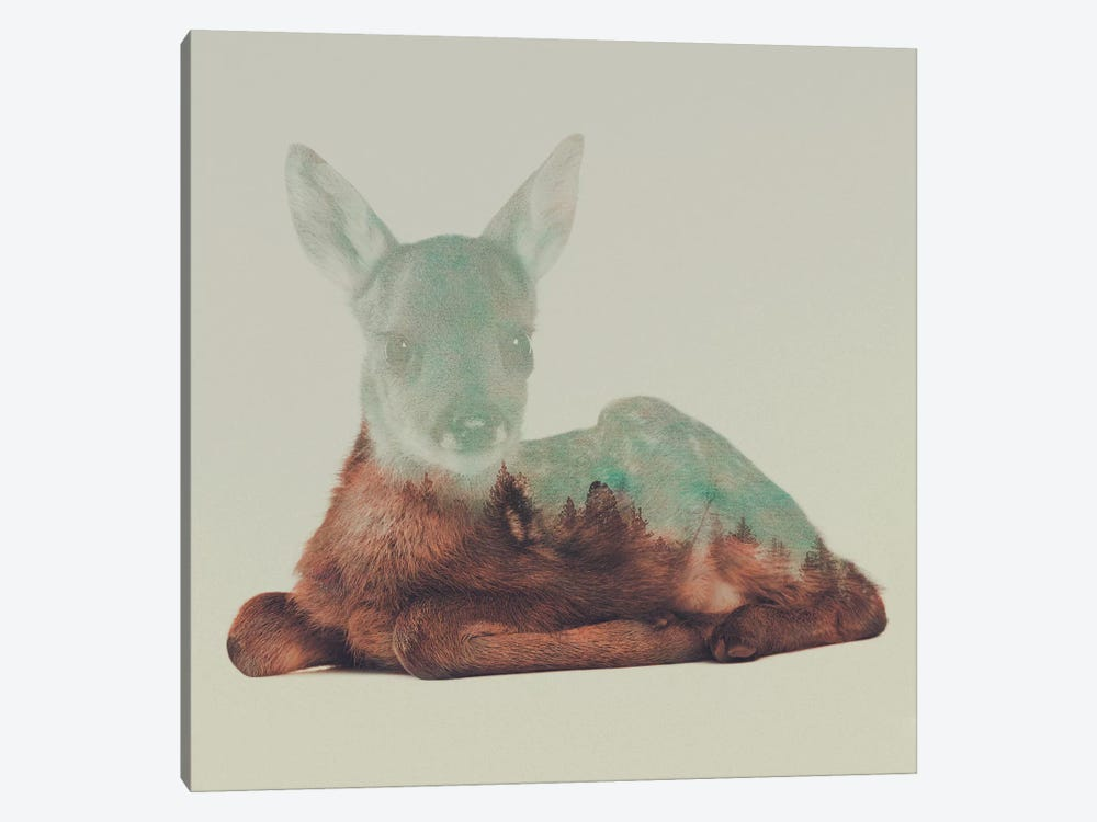 Resting Fawn by Andreas Lie 1-piece Canvas Art
