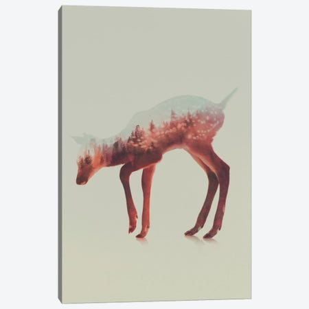 Deer III Canvas Print #ALE80} by Andreas Lie Canvas Art