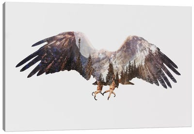 Arctic Eagle Canvas Art Print