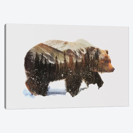 Arctic Grizzly Bear Canvas Print #ALE82} by Andreas Lie Canvas Art