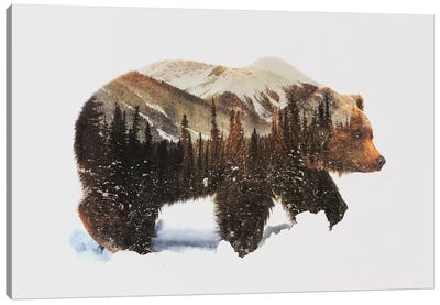 Arctic Grizzly Bear Canvas Print #ALE82
