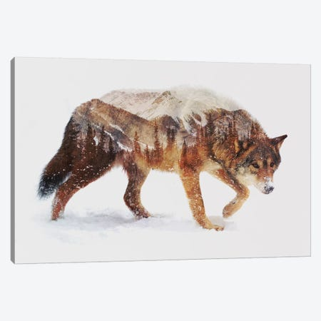 Arctic Wolf Canvas Print #ALE83} by Andreas Lie Canvas Artwork