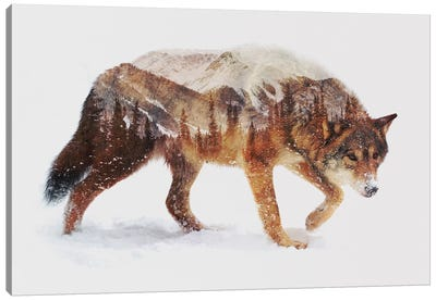Arctic Wolf Canvas Art Print