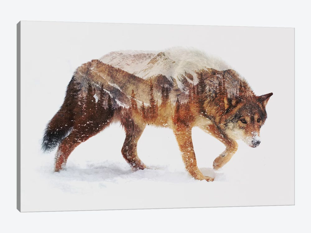 Arctic Wolf by Andreas Lie 1-piece Canvas Artwork