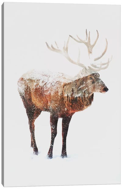 Deer V Canvas Art Print