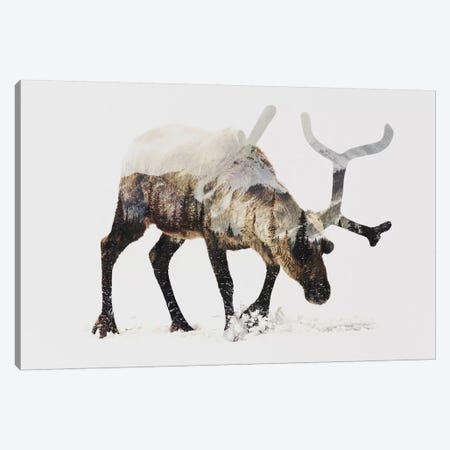 Reindeer IV Canvas Print #ALE85} by Andreas Lie Canvas Print