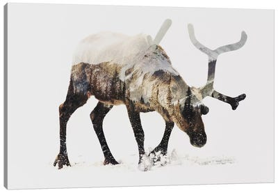 Reindeer IV Canvas Art Print