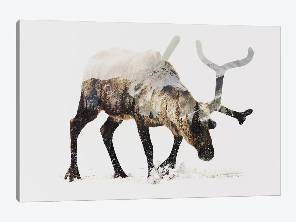 Reindeer IV by Andreas Lie 1-piece Canvas Wall Art
