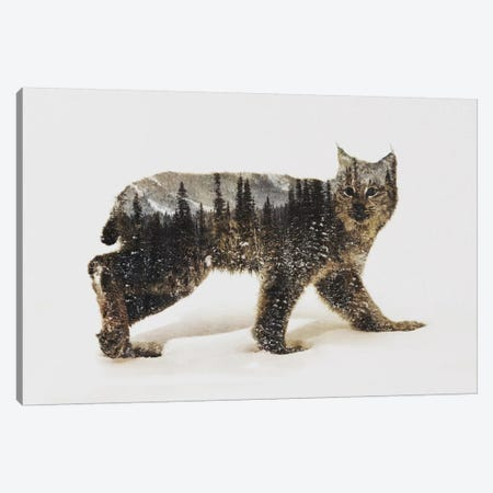 Lynx II Canvas Print #ALE86} by Andreas Lie Art Print