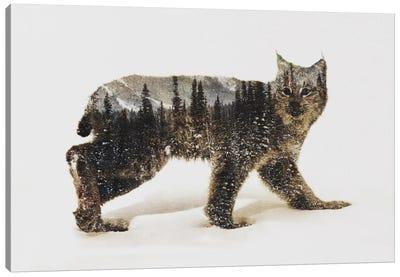 Lynx II Canvas Art Print