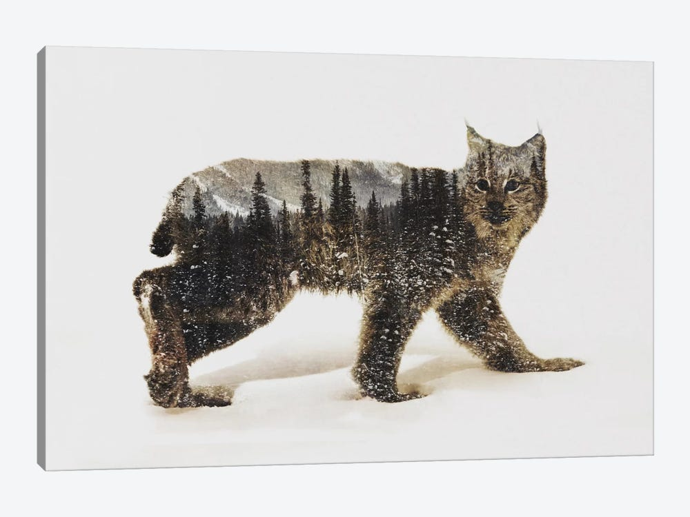 Lynx II by Andreas Lie 1-piece Canvas Print