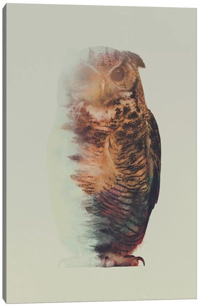 Owl Canvas Art Print