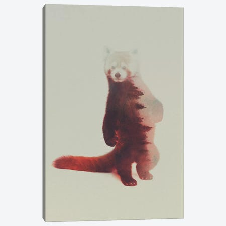 Red Panda Canvas Print #ALE89} by Andreas Lie Canvas Wall Art