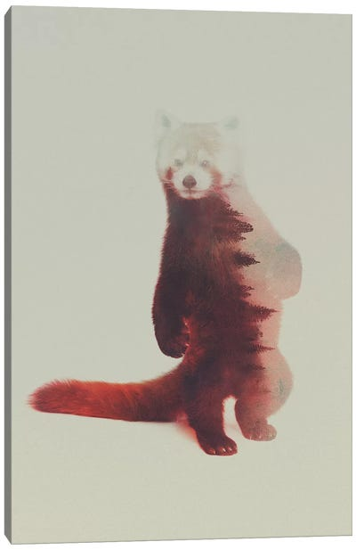 Red Panda Canvas Print #ALE89