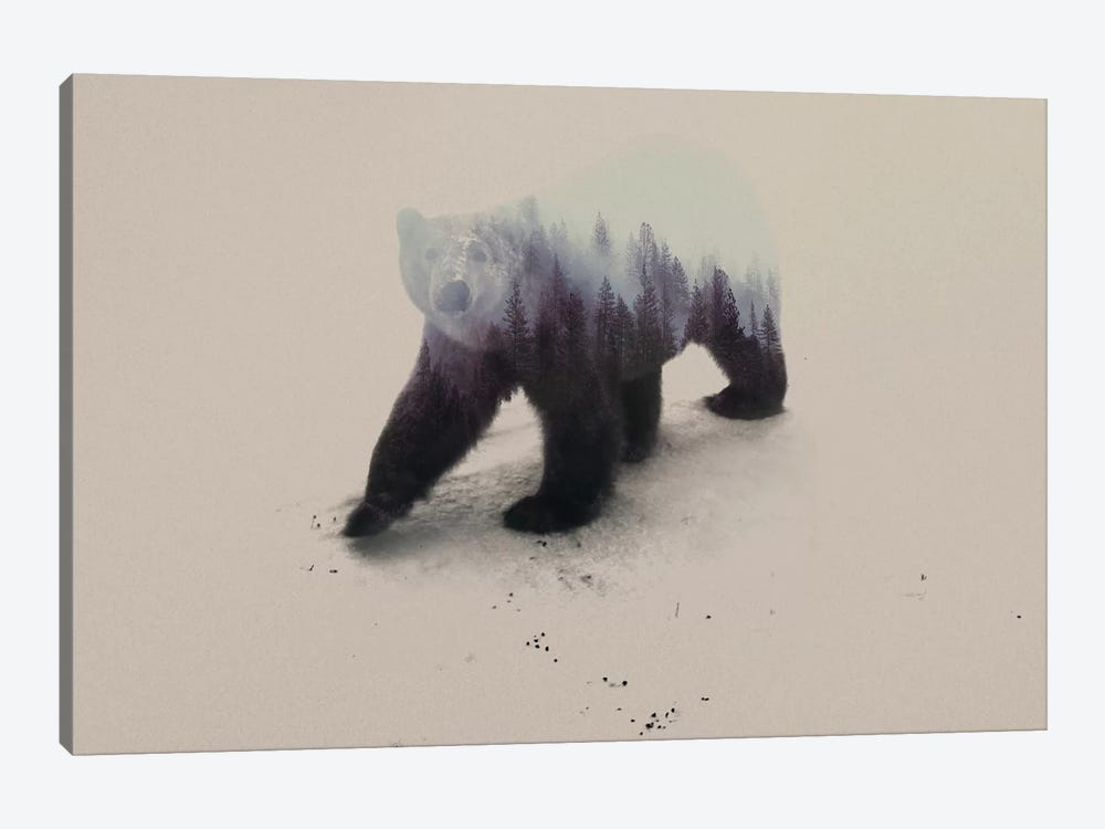 Polar Bear Canvas Wall Art By Andreas Lie Icanvas