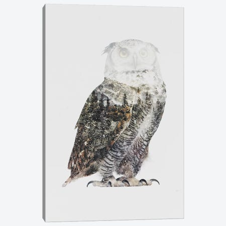 Arctic Owl Canvas Print #ALE96} by Andreas Lie Canvas Wall Art