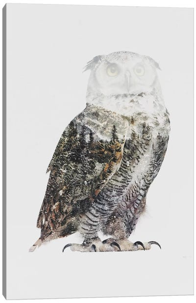 Arctic Owl Canvas Art Print