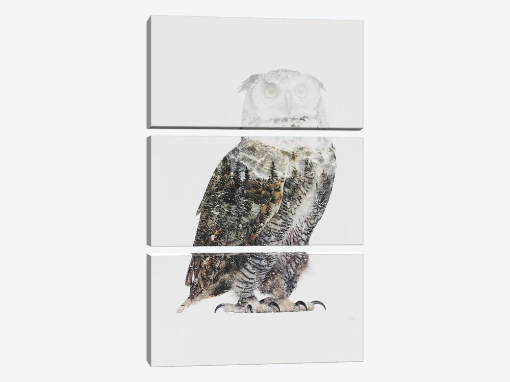 Arctic Owl by Andreas Lie 3-piece Canvas Wall Art