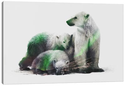 Aurora Borealis Series: Arctic Polar Bear Family Canvas Art Print