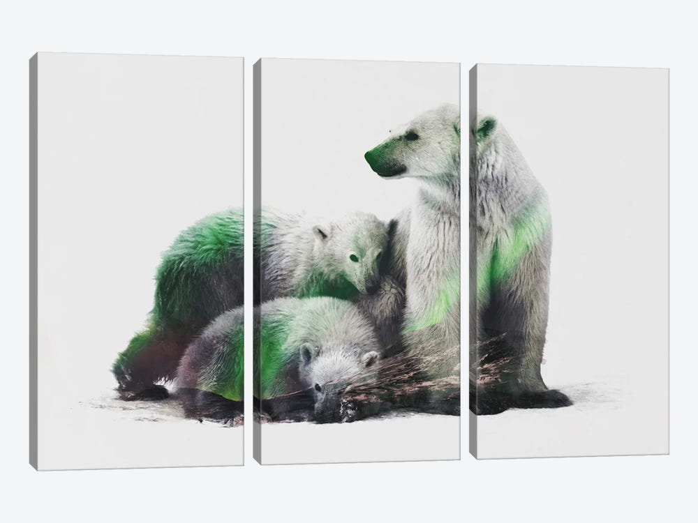 Aurora Borealis Series: Arctic Polar Bear Family by Andreas Lie 3-piece Canvas Print