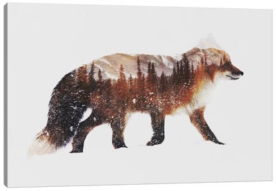 Arctic Red Fox Canvas Art Print