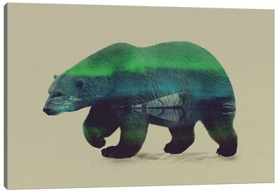Northern Light for Polar Bear Canvas Art Print