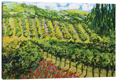 Mountain Vineyard Canvas Art Print