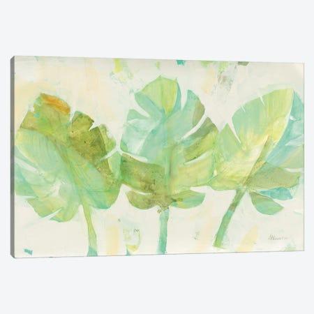Tropical Trio Canvas Print #ALH49} by Albena Hristova Canvas Print