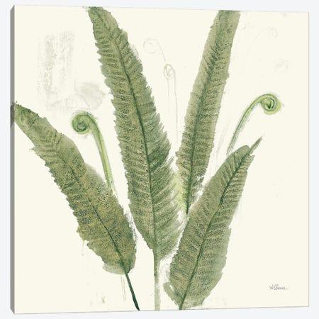 Forest Ferns II Dark Canvas Print #ALH73} by Albena Hristova Canvas Art