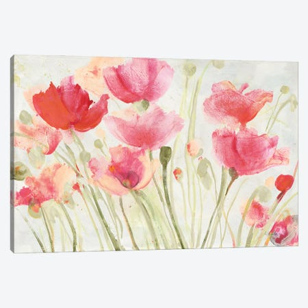 Blush Poppies Canvas Print #ALH91} by Albena Hristova Canvas Wall Art