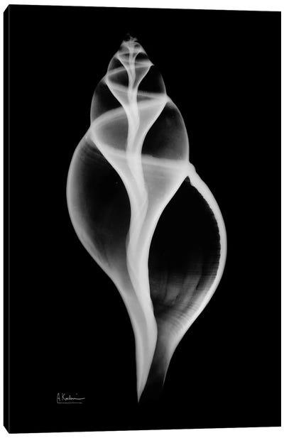 Tulip Shell Canvas Art Print