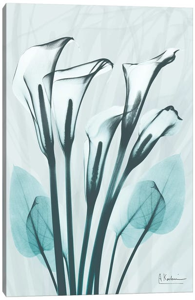 Calla Lily Crystalis I Canvas Art Print