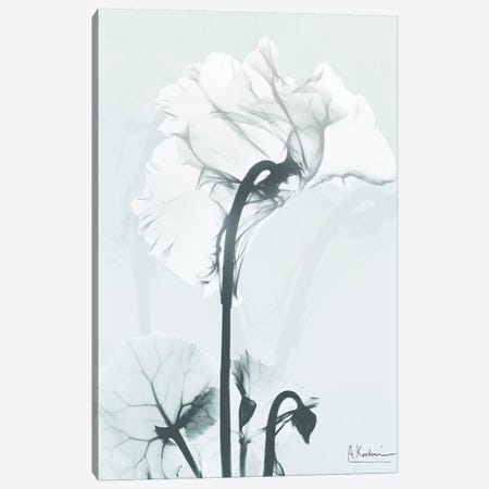 Desired Cyclamen I Canvas Print #ALK113} by Albert Koetsier Canvas Artwork