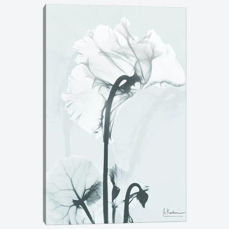 Desired Cyclamen I Canvas Print #ALK113} by Albert Koetsier Canvas Artwork