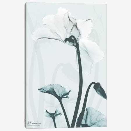 Desired Cyclamen II Canvas Print #ALK114} by Albert Koetsier Canvas Print
