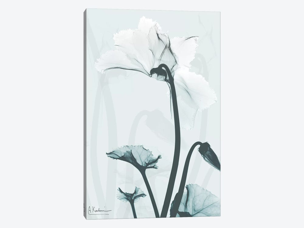 Desired Cyclamen II by Albert Koetsier 1-piece Canvas Art Print