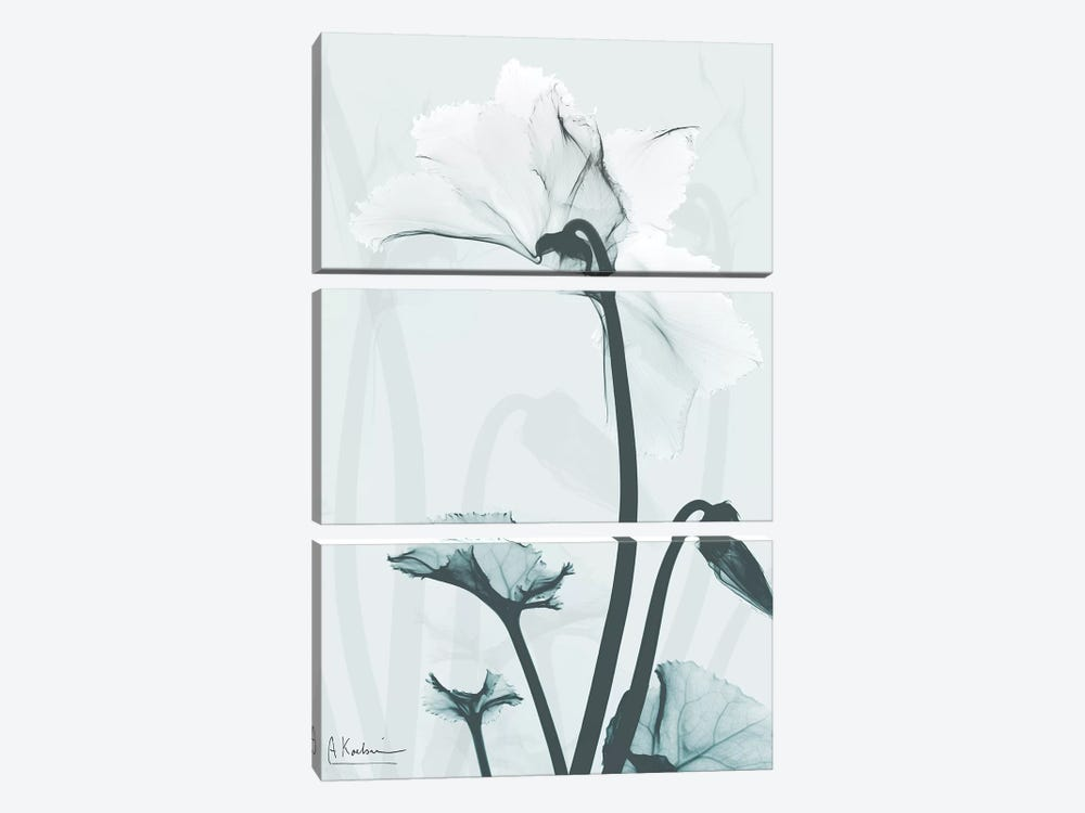 Desired Cyclamen II by Albert Koetsier 3-piece Canvas Art Print
