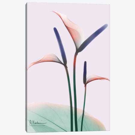 Flamingo Delight I Canvas Print #ALK115} by Albert Koetsier Canvas Art Print