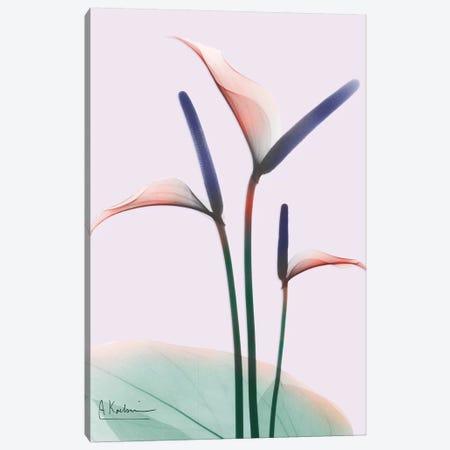Flamingo Delight I Canvas Print #ALK115} by Albert Koetsier Canvas Art Print