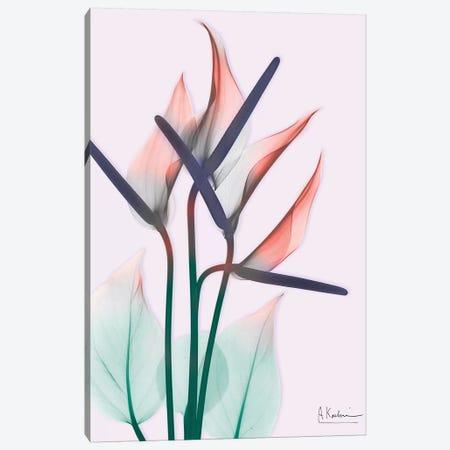 Flamingo Delight II Canvas Print #ALK116} by Albert Koetsier Canvas Art Print
