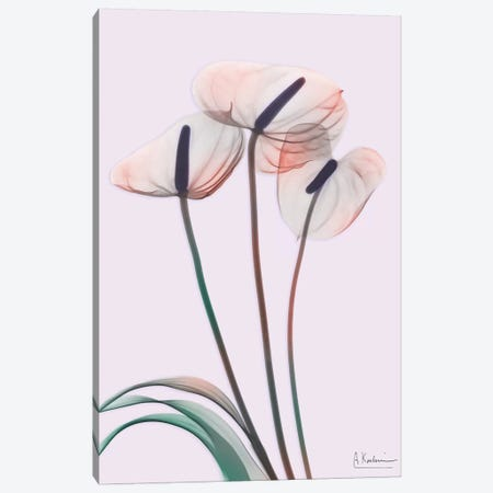 Flamingo Delight IV Canvas Print #ALK118} by Albert Koetsier Canvas Art