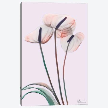 Flamingo Delight IV Canvas Print #ALK118} by Albert Koetsier Canvas Art