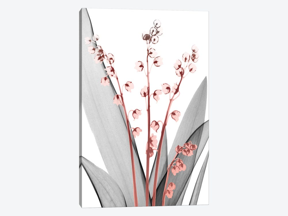 Lily Of The Blush II by Albert Koetsier 1-piece Canvas Artwork