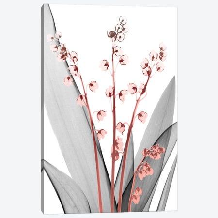 Lily Of The Blush II Canvas Print #ALK11} by Albert Koetsier Canvas Print