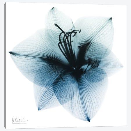 Glacial Amaryllis I Canvas Print #ALK120} by Albert Koetsier Art Print