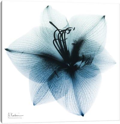Glacial Amaryllis I Canvas Art Print