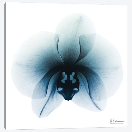Glacial Orchid I Canvas Print #ALK121} by Albert Koetsier Canvas Art Print