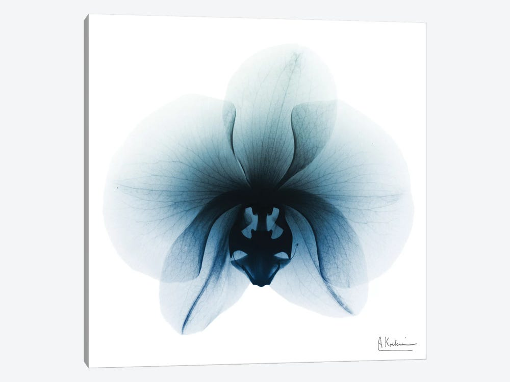 Glacial Orchid I by Albert Koetsier 1-piece Canvas Art Print